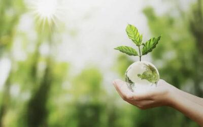 Bonus verde, le regole per l'acquisto di piante e materiali
